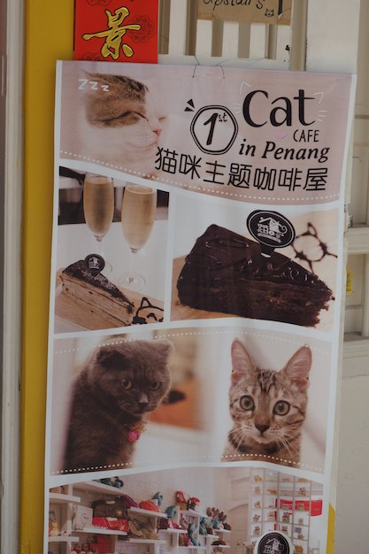 Louise would love this coffee shop in Penang where you have your coffee with the cats...
