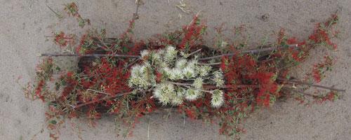 lou-flowers1