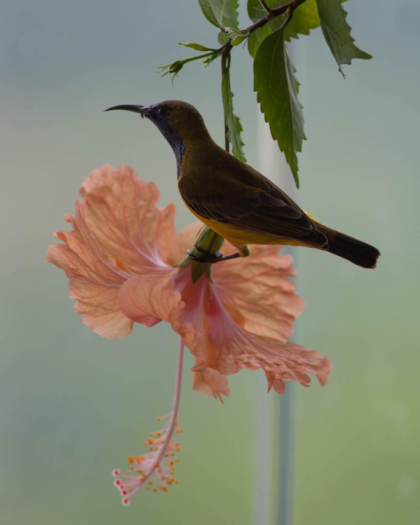 sunbird-lou-1